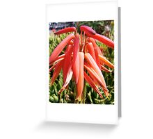 Jeweled Aloe Greeting Card