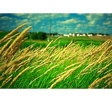 in the fields II Photographic Print