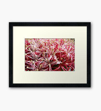 Pink Blast Framed Print