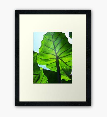 Green Veins Framed Print