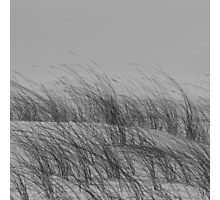 Dune Patterns Photographic Print