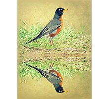 American Robin At Water's Edge Photographic Print