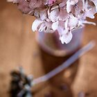 Still Life Hydrangea Blossom by Elizabeth Thomas