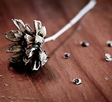 Still Life Rose of Sharon Seed Pod by Elizabeth Thomas