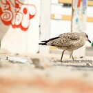 Seagull by sparrowdk