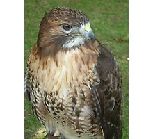 Caerphilly's Falcons Photographic Print