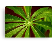 Green Leaves with Water Droplets Canvas Print