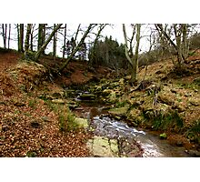 River Rye Photographic Print