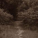 Perfect Path by steelwidow