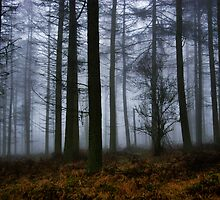 Misty Woods by Euan Christopher