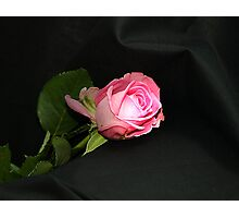 Rose on velvet Photographic Print