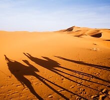 Camel Train Shadows by sunset by cpcphoto