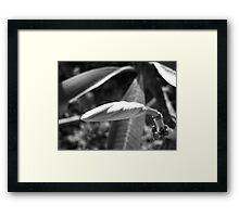 Plumeria Twist Framed Print