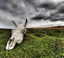 Plain of Despair by Christopher Meder