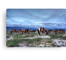 Horses on the Mongolian plain Canvas Print