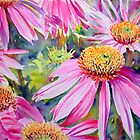 Purple Cone Flowers by Ruth S Harris