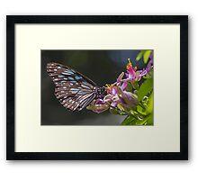 Blue Tiger, Pink Flower Framed Print