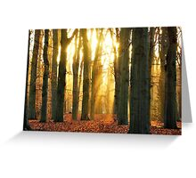 When the new day rose in the forest Greeting Card