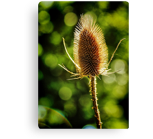 Thistle in Bokeh Canvas Print