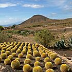 Parc Exotique Zoo. LOS CRISTIANOS, TENERIFE, CANARY ISLANDS by kojobar