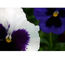 Purple, White, Black and Blue Photographic Print