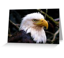 Portrait Of An Eagle III  Greeting Card