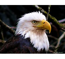 Portrait Of An Eagle III  Photographic Print