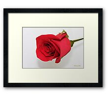 Let Me Call You Sweetheart ~ A Rose Framed Print