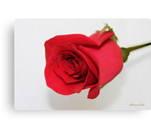 Let Me Call You Sweetheart ~ A Rose Canvas Print