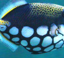 Fishy Portal Sticker