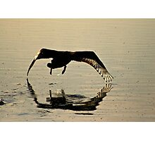 Early Morning Take Off.... Photographic Print