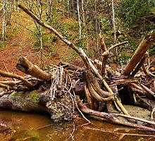 Drift wood in a river by naturalis