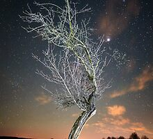 Night landscape with tree by naturalis