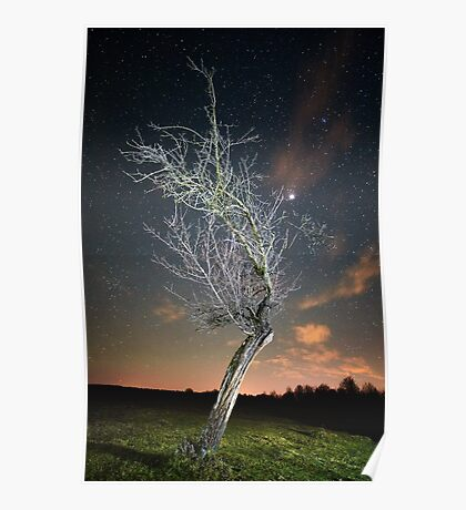 Night landscape with tree Poster