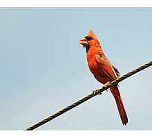 Cardinal on a Wire Photographic Print