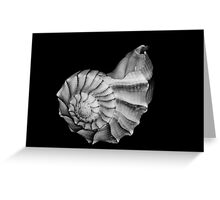 Seashell in Black and White Greeting Card