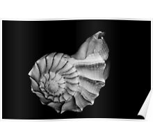 Seashell in Black and White Poster