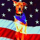 Star Spangled K9 by Nancy Stafford