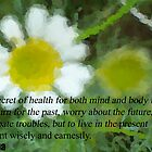 Buddha Quote  by Michelle BarlondSmith
