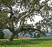 Home among the Gum trees... by Nick Hunt