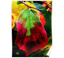 Autumn Jewel Leaf, Westonbirt Arboretum, GLOS, ENGLAND Poster