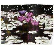 Waterlillies in the sun Poster