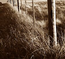 Fence by Tamara  Kenneally