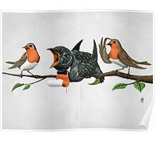 Cock Robin (wordless) Poster