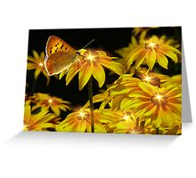 Nature's Nightlights Greeting Card