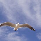 Jonathon Livingston Seagull up in the Cirrus by didjman