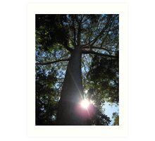 Rainforest Canopy Art Print