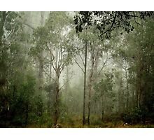 Rainforest Photographic Print