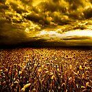 Golden Field by Jacky