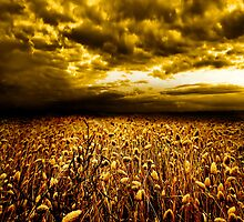 Golden Field by PhotoDream Art